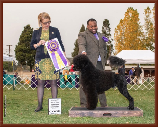 Bernie Wins Best of Breed at the 2018 NCPWDC Regional Specialty Dog Show in Napa