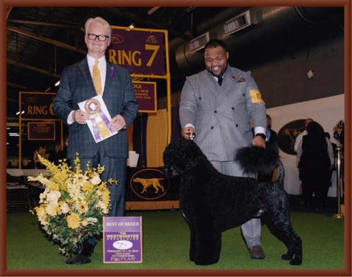 Bernie Wins Best of Breed at Westminster in February 2019 with Handler Remy Smith-Lewis