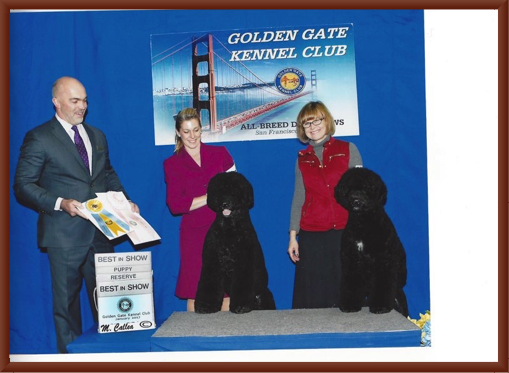 Bernie Wins Best Puppy in Show and Manly Wins Reserve Best in Show at the 2017 Golden Gate Kennel Club Dog Show.