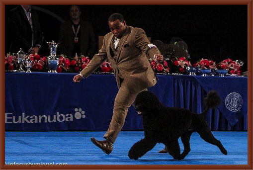 Remy Shows Manly at the 2015 Eukanuba National Dog Show