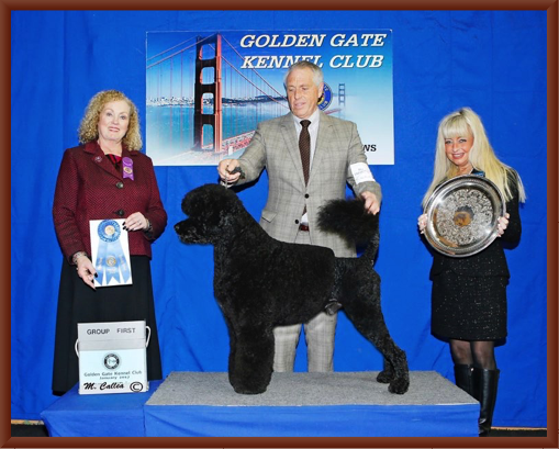Manly Wins Working Group 1 And Reserve Best In Show  2017 Golden Gate Kennel Club