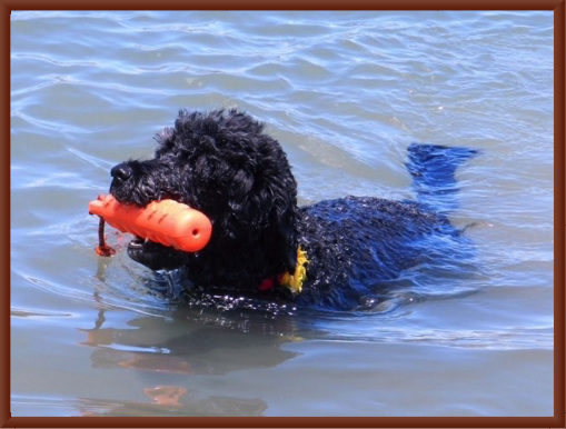 Sugar Pie - A True Water Dog